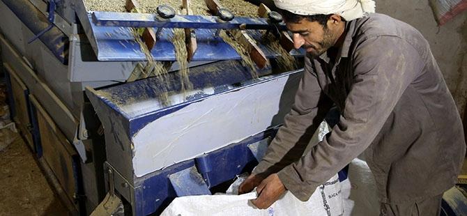 Yemen'de Ramazan öncesi kahve telaşı 9