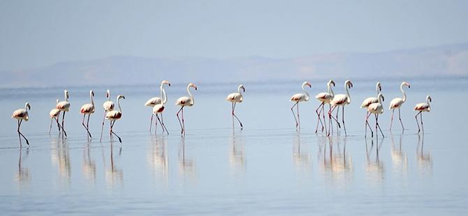 Binlerce flamingo kuluçkadan çıktı 1