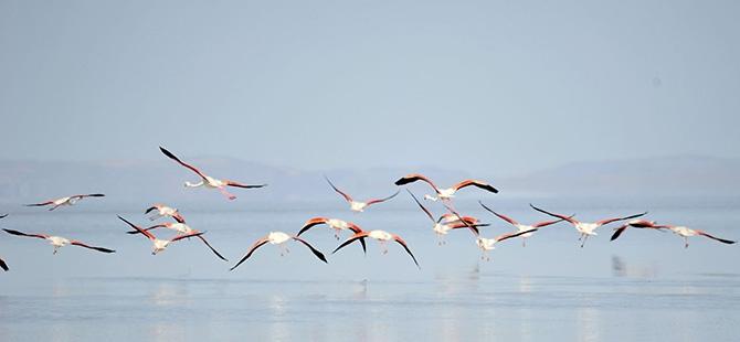 Binlerce flamingo kuluçkadan çıktı 10