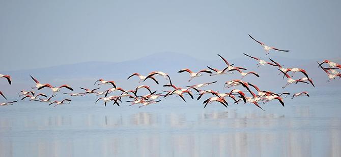 Binlerce flamingo kuluçkadan çıktı 15