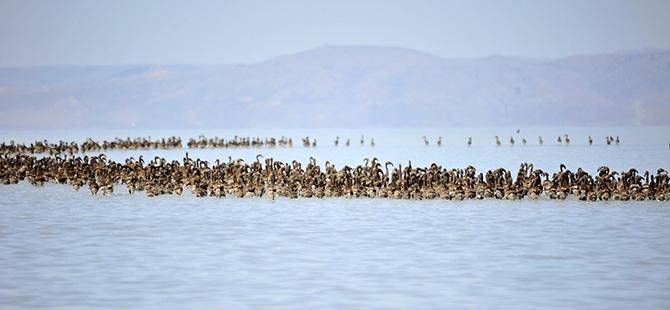 Binlerce flamingo kuluçkadan çıktı 18