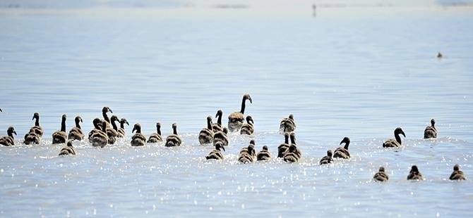 Binlerce flamingo kuluçkadan çıktı 20