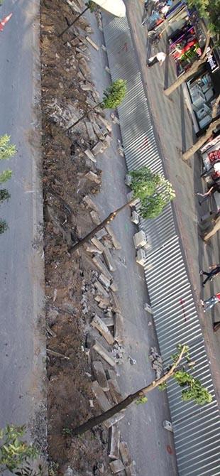 Mevlana Caddesi'nde ağaç katliamı 1