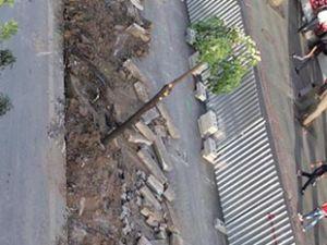 Mevlana Caddesi'nde ağaç katliamı