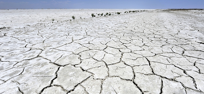 Tuz Gölü flamingo mezarlığına dönüyor 15