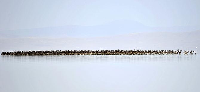 Tuz Gölü flamingo mezarlığına dönüyor 19