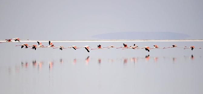 Tuz Gölü flamingo mezarlığına dönüyor 21