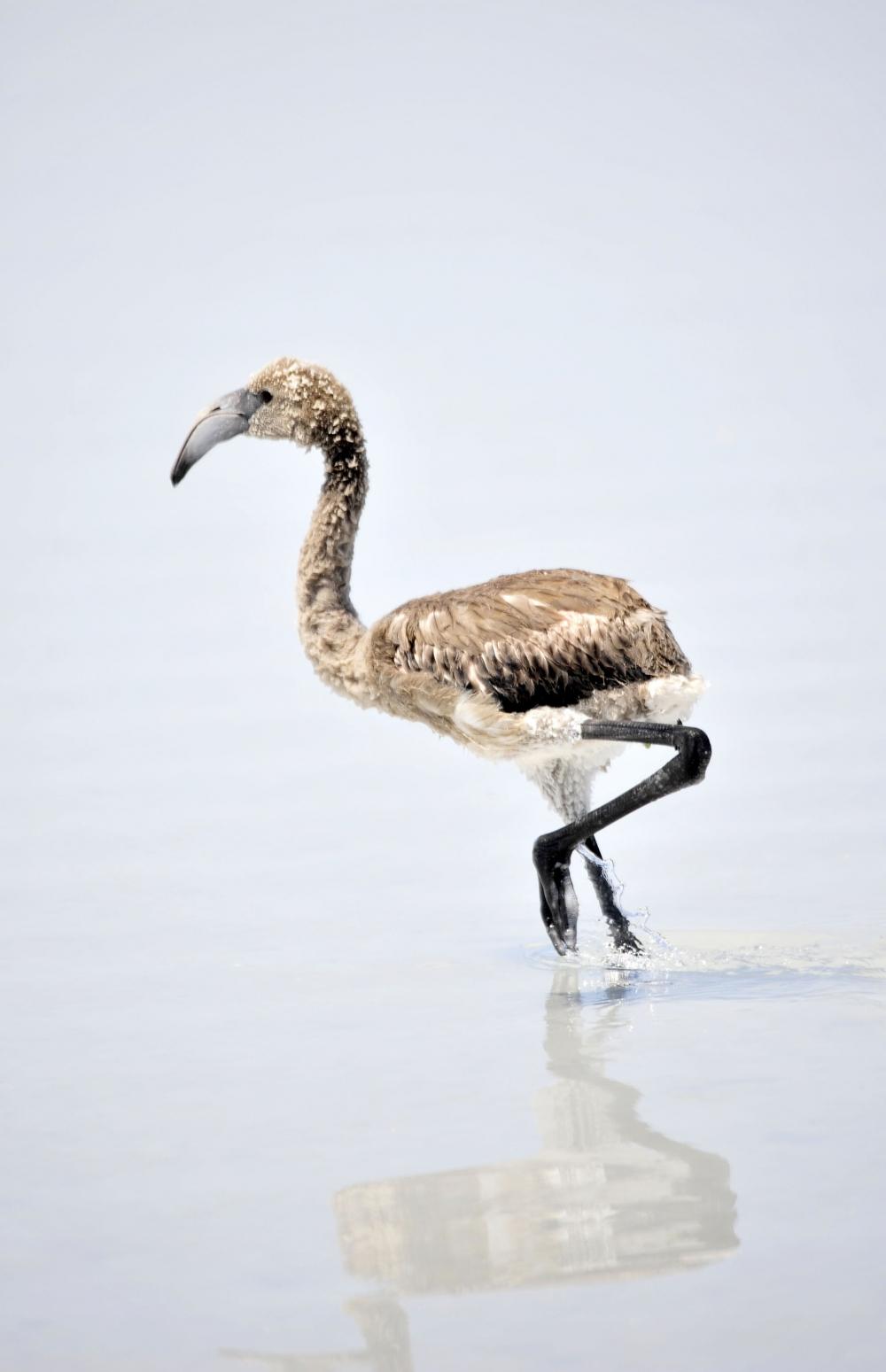 Tuz Gölü flamingo mezarlığına dönüyor 24