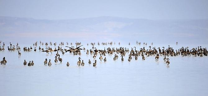 Tuz Gölü flamingo mezarlığına dönüyor 25