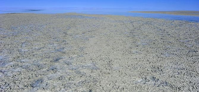 Tuz Gölü flamingo mezarlığına dönüyor 27