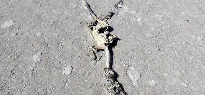 Tuz Gölü flamingo mezarlığına dönüyor 33