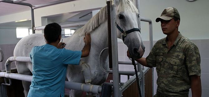 TSK'nın atları nerede yetişiyor? 1