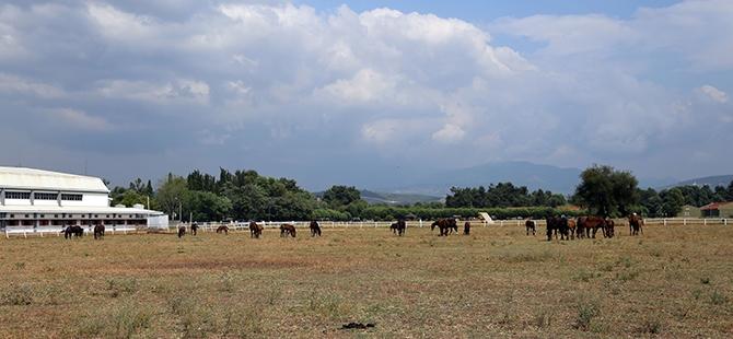 TSK'nın atları nerede yetişiyor? 15