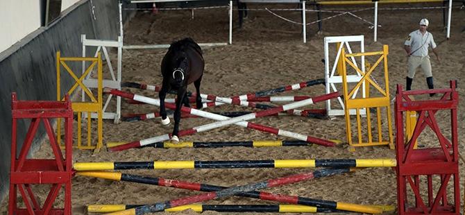 TSK'nın atları nerede yetişiyor? 7