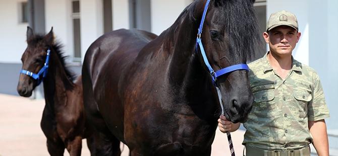 TSK'nın atları nerede yetişiyor? 8