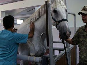 TSK'nın atları nerede yetişiyor?