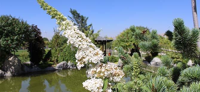 Konya'daki küçük Japonya 9