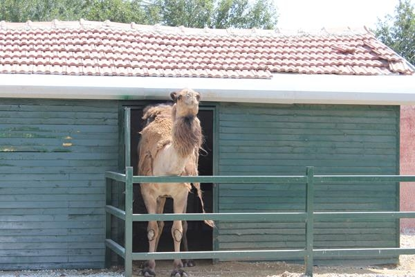 Hayvanlar Alemi'ne hoş geldiniz 10