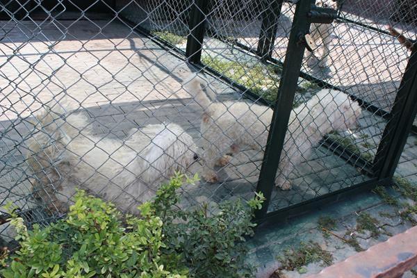 Hayvanlar Alemi'ne hoş geldiniz 12
