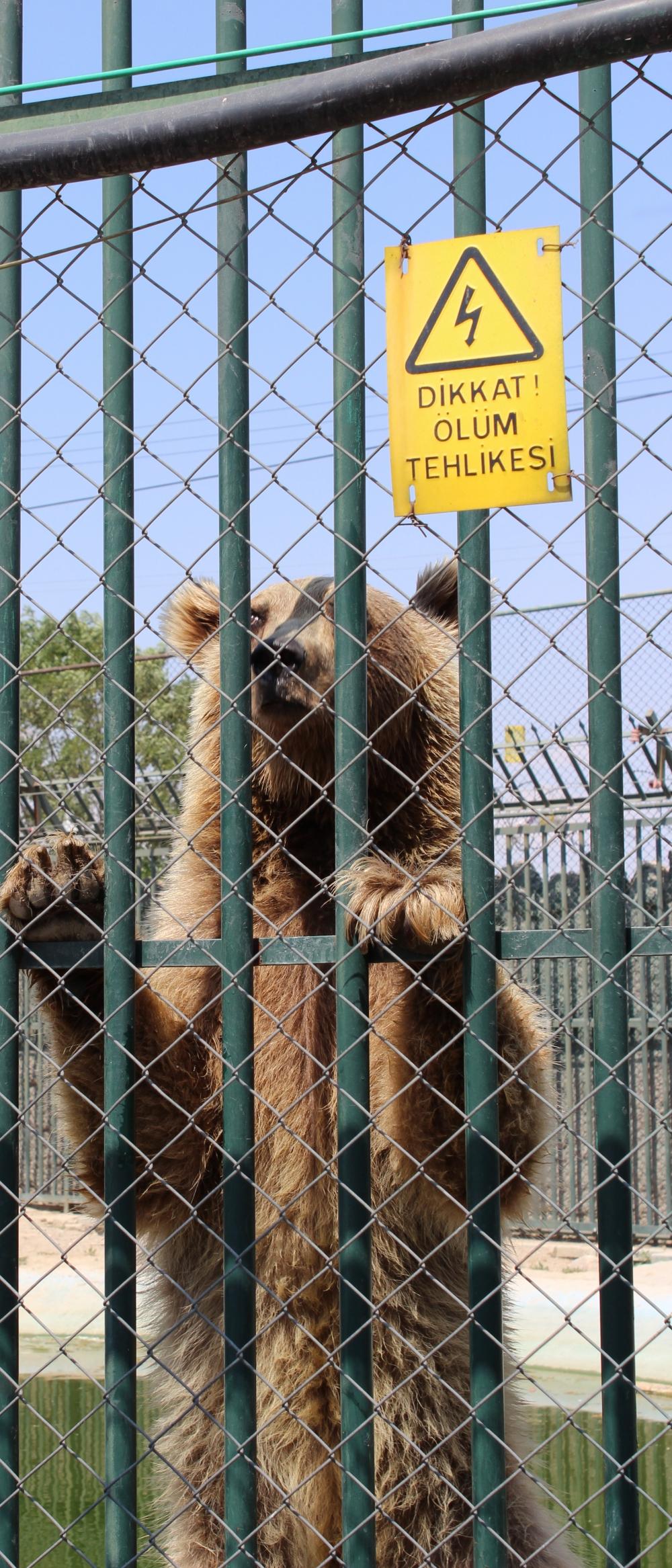 Hayvanlar Alemi'ne hoş geldiniz 16