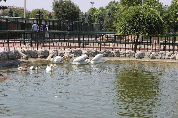Hayvanlar Alemi'ne hoş geldiniz 6