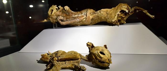 Anadolu'nun mumyaları 2