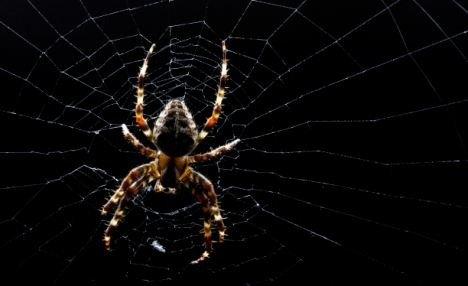 Örümcek ağındaki inanılmaz sır! 1