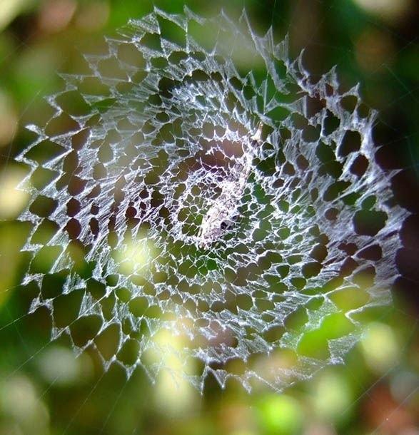 Örümcek ağındaki inanılmaz sır! 13