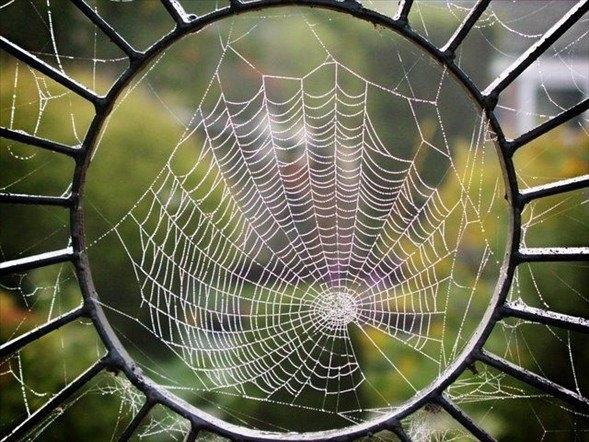 Örümcek ağındaki inanılmaz sır! 15