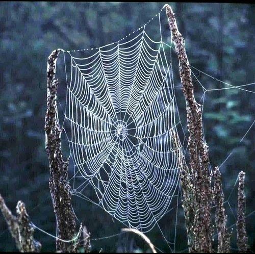 Örümcek ağındaki inanılmaz sır! 16
