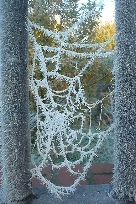 Örümcek ağındaki inanılmaz sır! 18