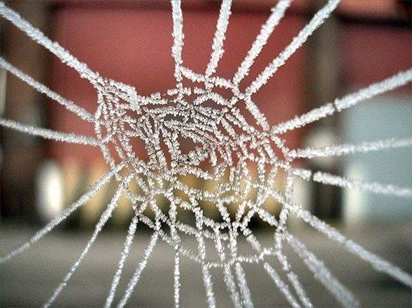 Örümcek ağındaki inanılmaz sır! 22