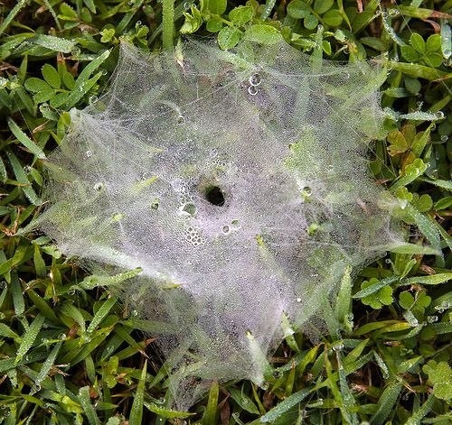Örümcek ağındaki inanılmaz sır! 24