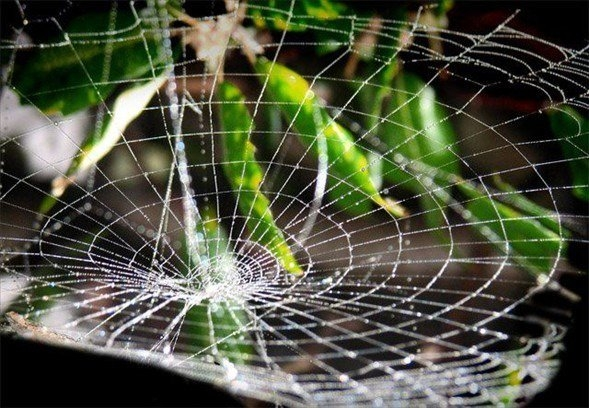 Örümcek ağındaki inanılmaz sır! 26