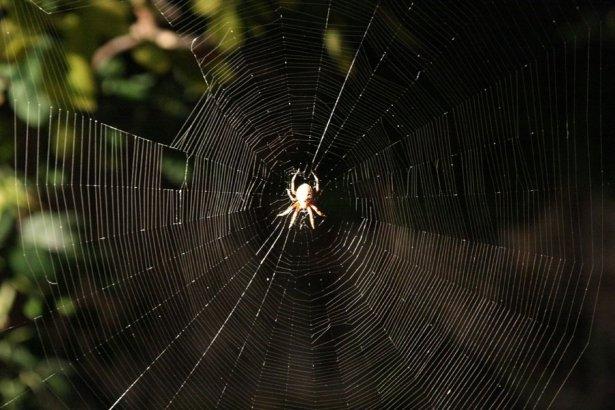 Örümcek ağındaki inanılmaz sır! 27
