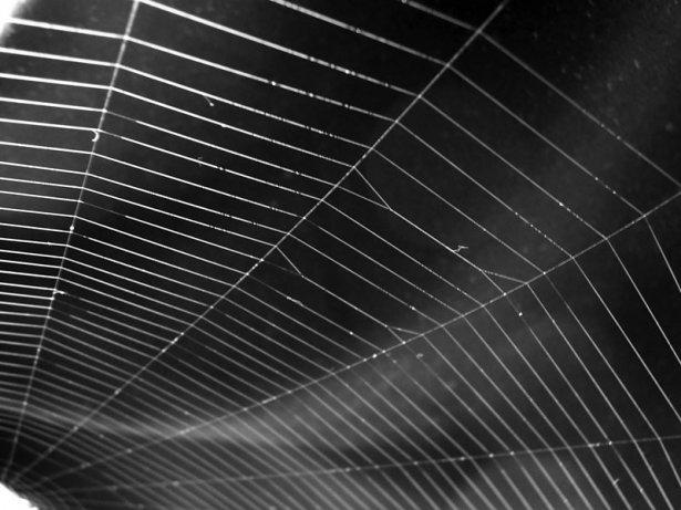 Örümcek ağındaki inanılmaz sır! 3