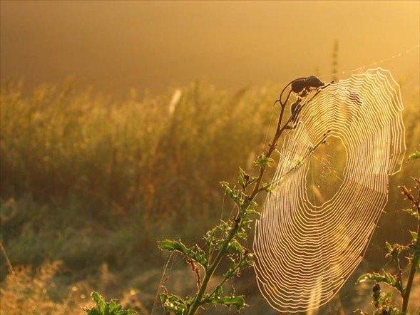Örümcek ağındaki inanılmaz sır! 4