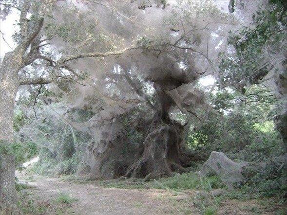 Örümcek ağındaki inanılmaz sır! 5
