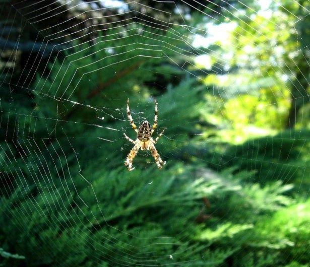 Örümcek ağındaki inanılmaz sır! 6