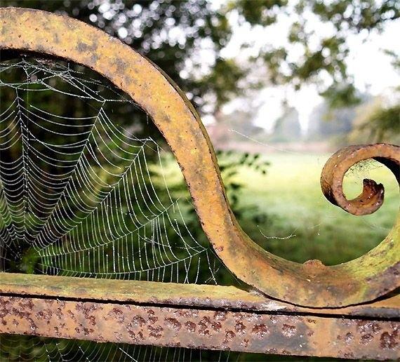 Örümcek ağındaki inanılmaz sır! 7