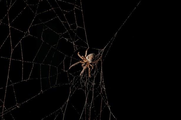 Örümcek ağındaki inanılmaz sır! 8