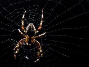 Örümcek ağındaki inanılmaz sır!