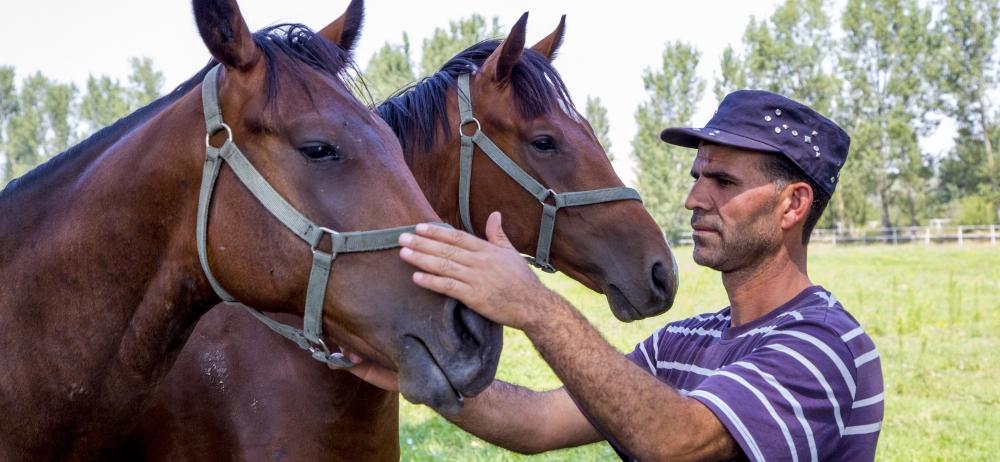 Ereğli'nin ayrık otu, yarış atlarını koşturuyor 1