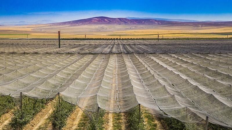 Bu elma bahçesi 700 futbol sahası büyüklüğünde 3