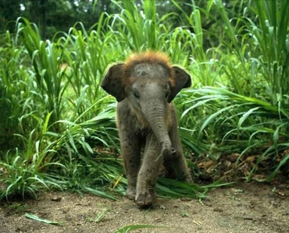 Doğanın en sevimli yavruları 10