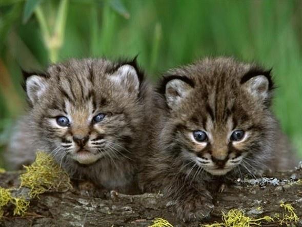 Doğanın en sevimli yavruları 11