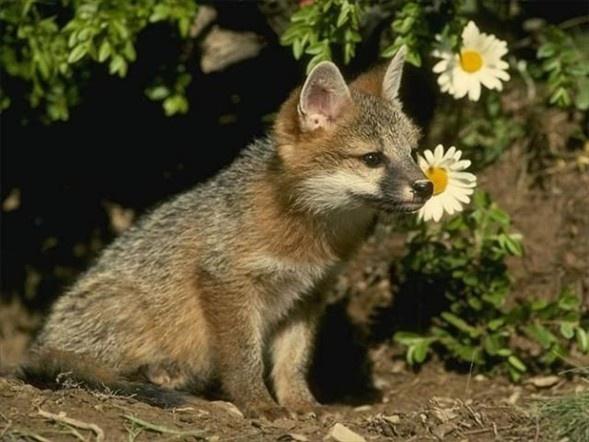 Doğanın en sevimli yavruları 12