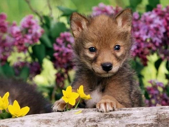 Doğanın en sevimli yavruları 13