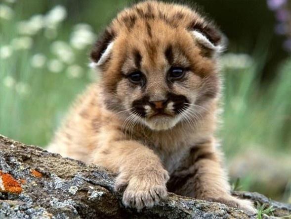 Doğanın en sevimli yavruları 14