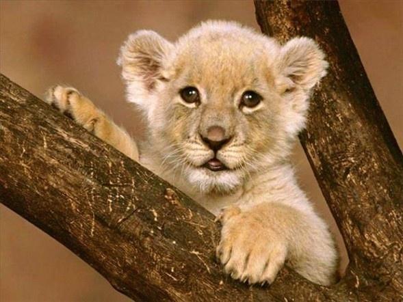 Doğanın en sevimli yavruları 17